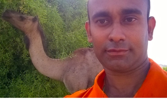 kishore camel